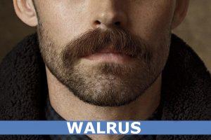 BIGOTE WALRUS